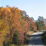 SCP Entrance Drive Fall Colors