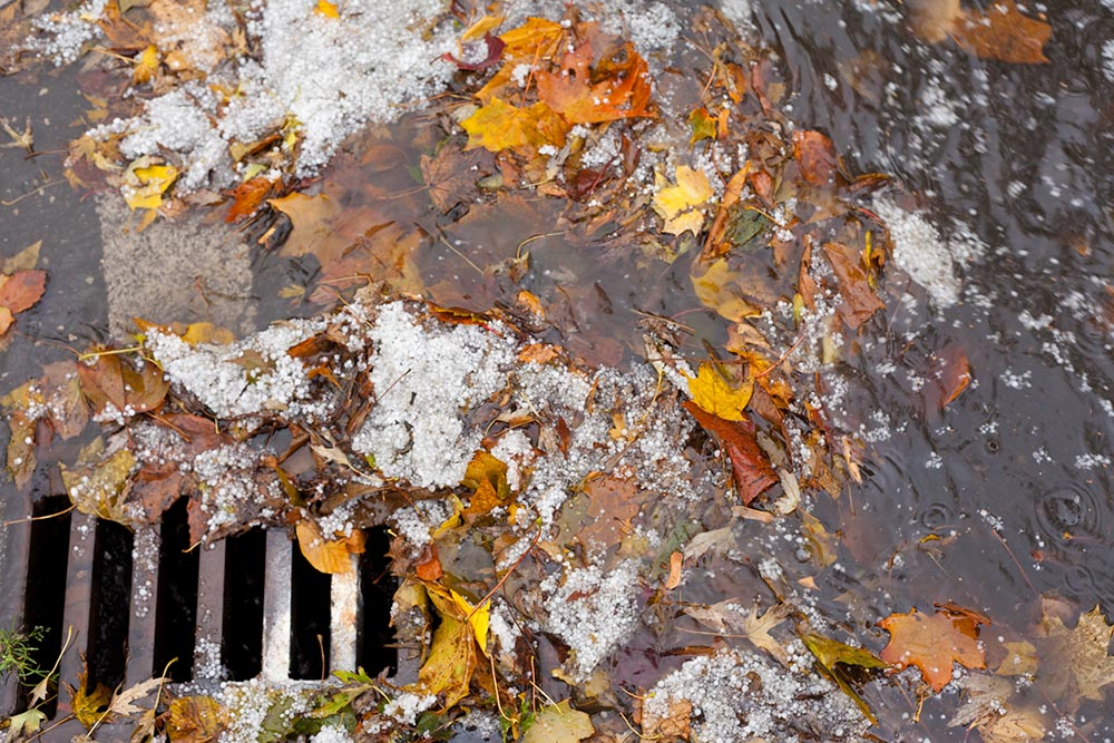 Leaves clogging stormwater drain